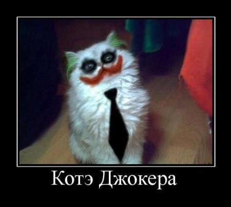 демотиватор - кот