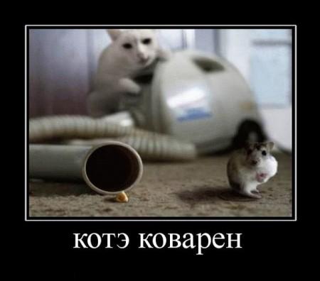 демотиватор - кот и мышка